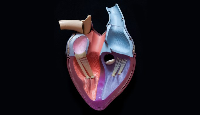 Researchers conducting the BEAT-HF trial concluded that mirabergron treatment in patients with chronic heart failure did not improve LVEF.