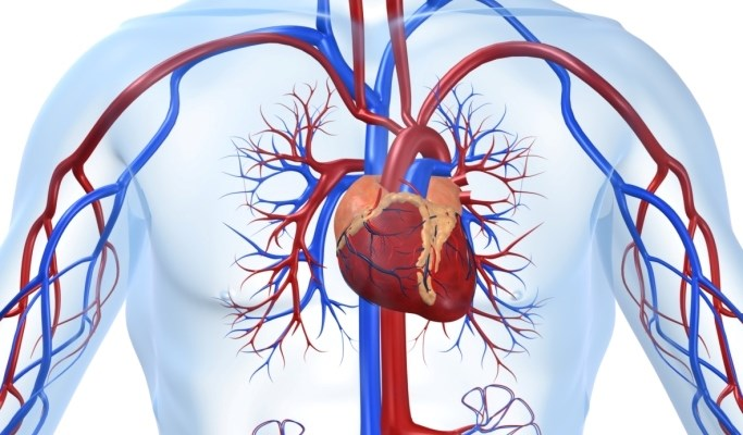 Cardiovascular Stress in Type 2 Diabetes Reduced With Canagliflozin