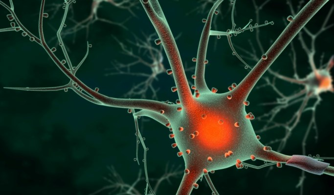 Dysglycemia Affects Cognition, Brain Structure in Older Adults