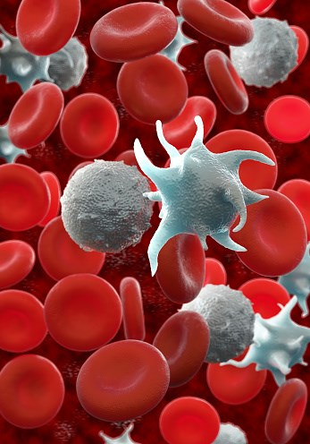 Fostamatinib Seems Effective for Immune Thrombocytopenia
