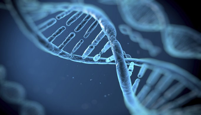 It is still unclear which genes might offer some obesity protection.