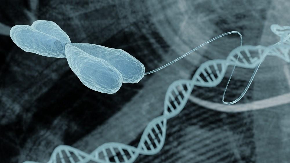 Leukocyte Telomere Length as Potential Biomarker for Atrial Fibrillation