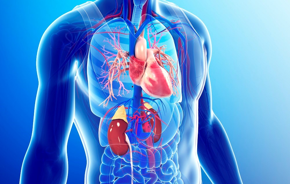 Tiotropium Associated With Increased Cardiovascular Risk in COPD