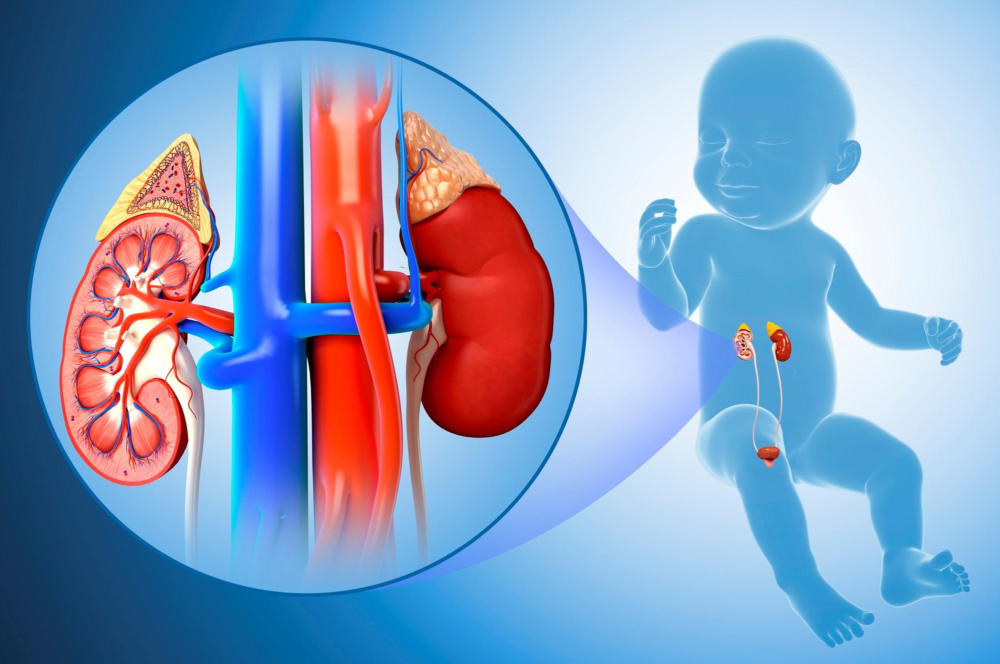Neonates with left heart obstruction consistently had kidneys that were greater than normal.