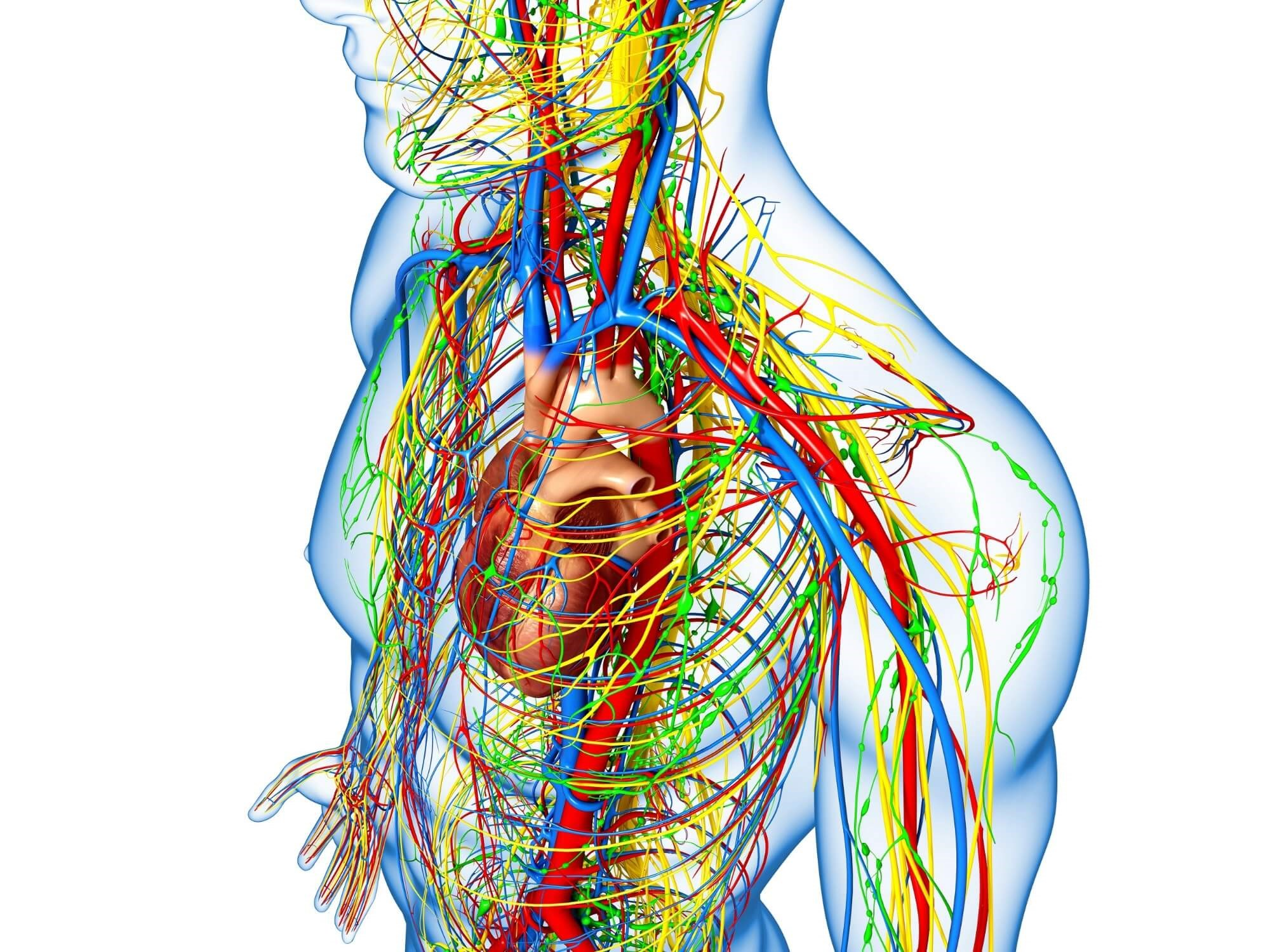 Hyperglycemia, obesity, and hypertriglyceridemia are negatively related to cardiovascular autonomic neuropathy indices.