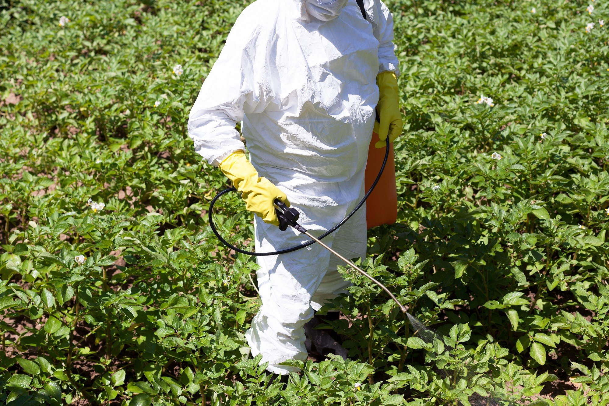 Occupational Exposure to Metals, Pesticides Tied to CVD in Hispanics
